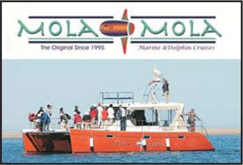 mola-mola-image-4